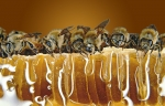 mcd-honey-farm-banner