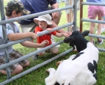 calf-and-kids2011