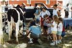cows2000