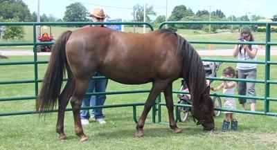 sundaehorse2011
